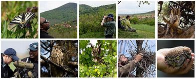 Serbia Birdwatching tour April 2012