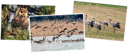 Serbia winter birdwatching tour